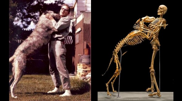 p2-10-18-16-anthropologist-grover-krantz-dog-clyde