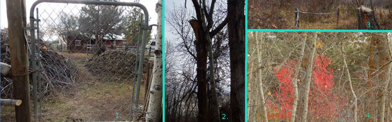 6-collage2-walk11-11-16