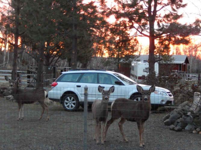 15-3-deer-in-for-breakfast